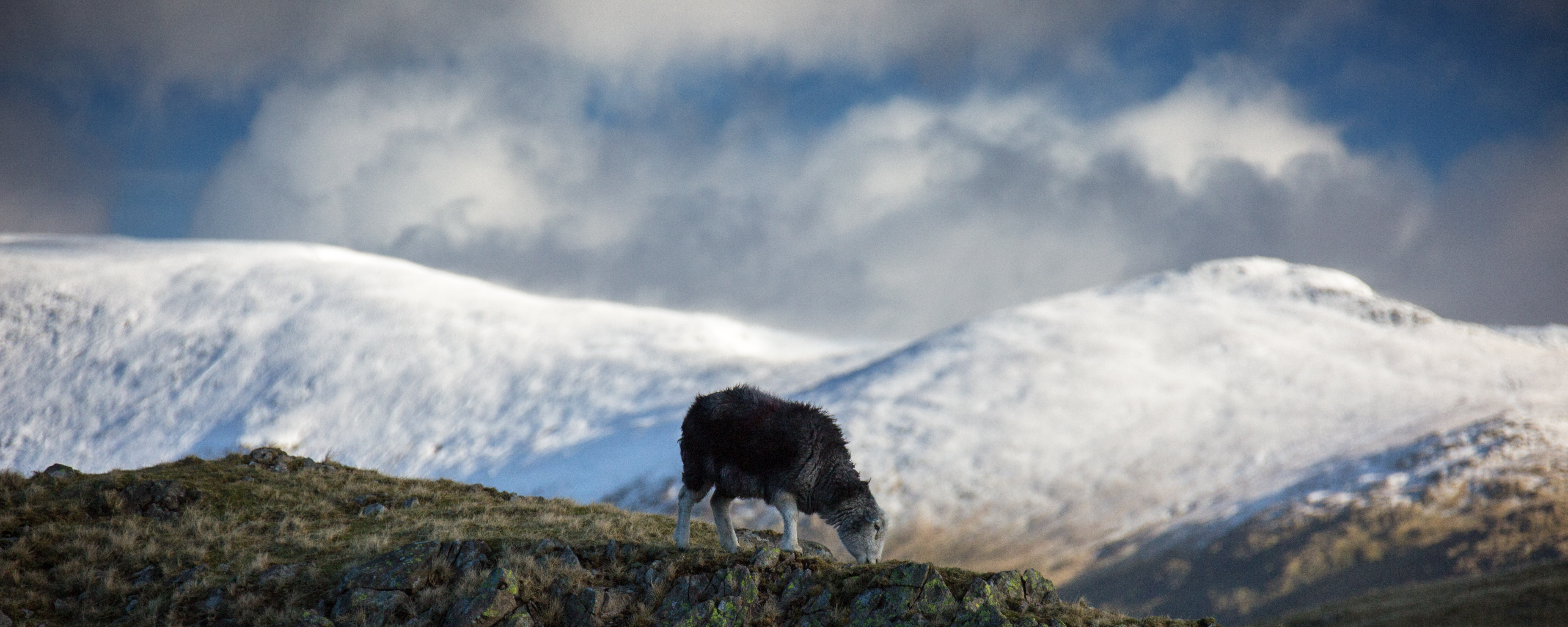 Herdwick Photography by Betty Fold Gallery