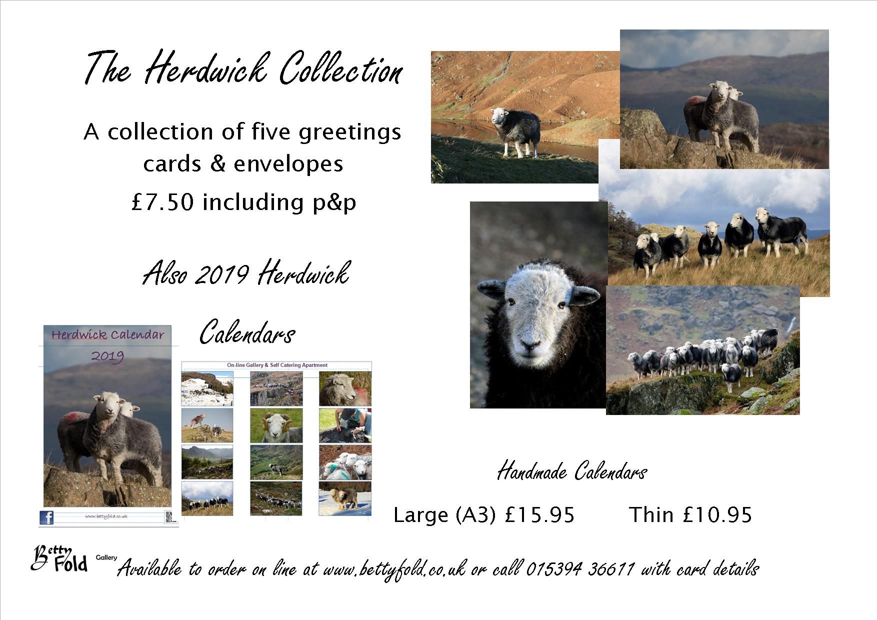 Herdwick images from Betty Fold Gallery