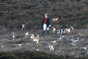 Beagle Images by Neil Salisbury