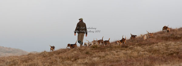 Hounds above Kentmere by Betty Fold Gallery
