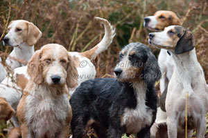 Fell & Welsh Foxhound Photography by Neil Salisbury Hunting Photographer