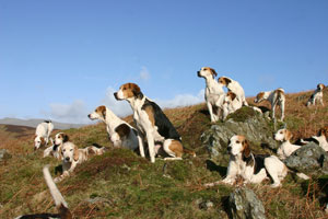 Coniston hounds Watching by Neil Salisbury