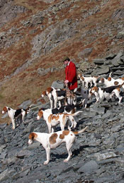 Coniston Foxhounds at Blue Quarries by Neil Salisbury