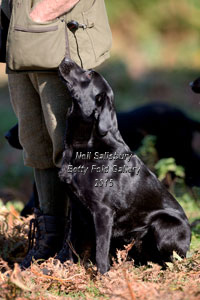 Gundog Photography